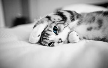 kitten_19023